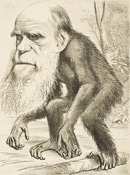 caricature-Darwin-as-ape